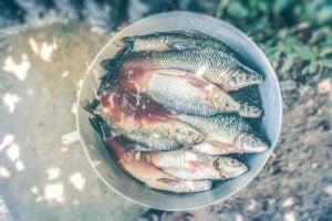 Gratitud y abundancia - Cubo con peces